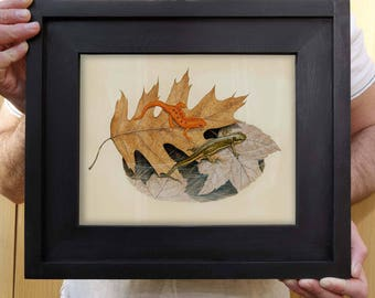 Framed Red Spotted Newt Print - 8 x 10 inch print by Matt Patterson