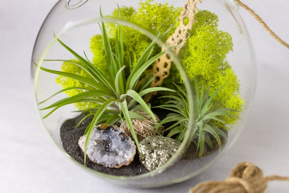 DIY Terrarium Kit with Air Plants, Geode, Pyrite, & Desert Rose || Large Round Hanging