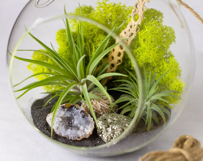 Featured listing image: DIY Terrarium Kit with Air Plants, Geode, Pyrite, & Desert Rose || Large Round Hanging