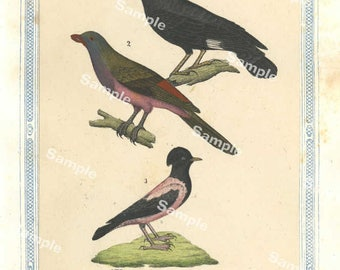 Natural History original hand colored print of birds over 150 years old Rare find