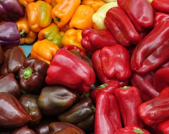 Rainbow Bell Peppers Mix, 20+ seeds