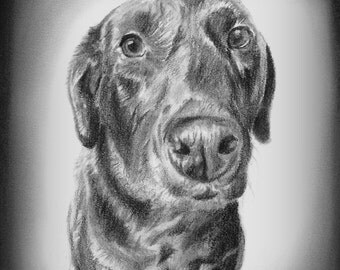 Dog Portrait, Custom Dog Portrait, Pet Portrait, Dog Drawing, Dog Sketch, Black and White Dog Drawing, Drawing From Photo, Pencil Sketch