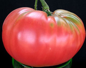 VTHB) BRANDYWINE-PINK Tomato~Seeds!!!~~~~~~Great Heirloom!