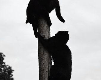 climbing cat photography | animal photography | still life | wall art