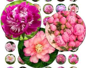 Peony Flower Blossoms Paeony Spring Summer Mothers Day Digital Images Collage Sheet 1 inch Circles 8.5x11 & 4x6 INSTANT Download BC110