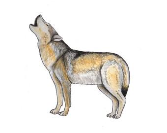 Grey Wolf Howling // A4 & A5 Print