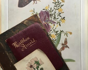Beautiful botanical print with moth...