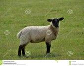 Custom Black Faced Lamb Travel Mug