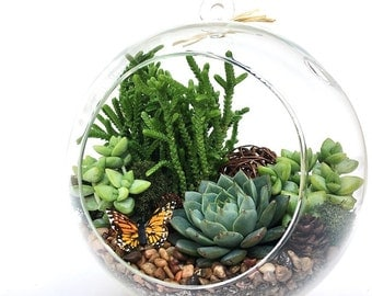 "Large Globe Succulent Terrarium Kit ""Woodsy""-Terrarium DIY Kit-Housewarming Gift-Birthday Gift-Gift Idea-Table Decor-Fathers Day Gift"