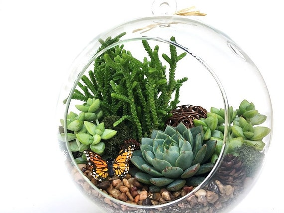 large globe succulent terrarium kit. Black Bedroom Furniture Sets. Home Design Ideas