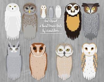 Owl Clipart Woodland Owl Illustration Barn Owl Snowy Owl Great Horned Owl Barred Owl Screech Owls Woodland Scrapbooking Clipart Bird Lovers