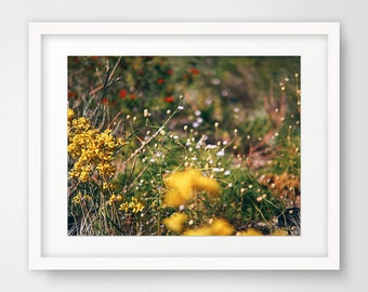 Instant Digital Download, Printable Art, Photography, Dreamy Photography, Wildflowers, Spring, Flowers, Nature, Wall Decor, Wall Art