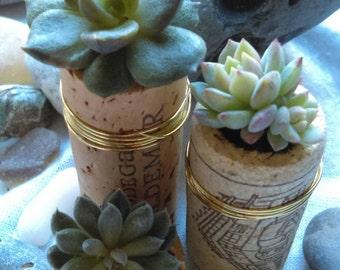 Set of 3 Succulent Cork Planters - Real Succulents