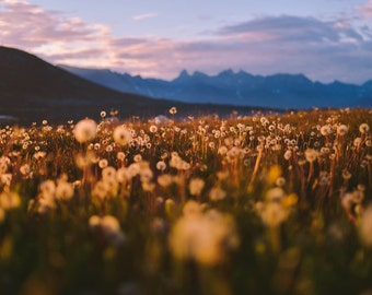 A Field of Dreams, Greenland Photography