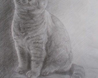 "Birthday Greeting Card British Shorthair Cat 7""x5"" From my original pencil drawing. Blank inside for your own message."