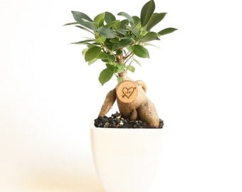 Little Bonsai Love Tree, Personalized Valentine's gift