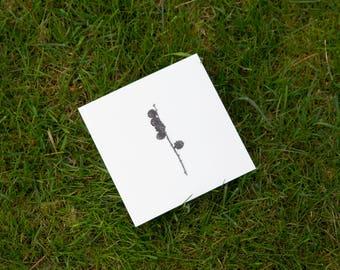 Larix postcard