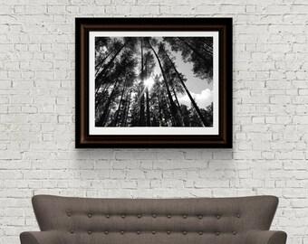 Trees Photography - Landscape Photography - Latvia Photograph - Nature Photography - Original Fine Art - Digital Download - Latvia