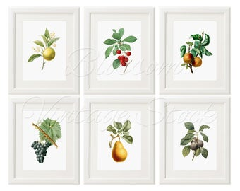 Fruit Botanical print wall art Set of 6 print antique Fruits illustration print wall art decor kitchen home green INSTANTD DOWNLOAD - 2425