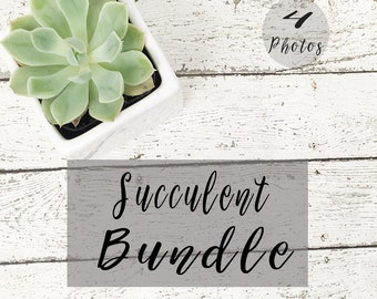 Succulent Bundle Styled Stock Photography| 4 stock photos