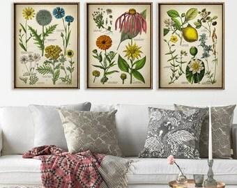 Botanical print set of 3, Botanical Set, flower print set of medicinal plants, botanical poster, botanical wall decor, marigold, camomile