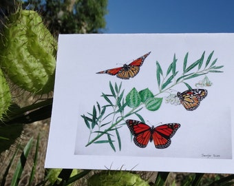Greeting card - Wanderer Butterflies on a swan plant - Monarch butterflies - Butterflies