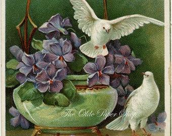 White Doves Green Vase Purple Violets 1908 Vintage Postcard Embossed