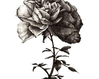 A Rose - (Print)