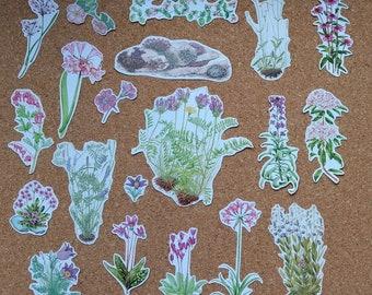 Purple Pink Flowers Vintage Botanical Ephemera Upcycled Scraps Grab Bag for Scrapbooking, Collage, Embellishments, Card Making