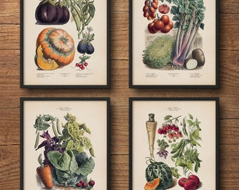 Botanical print set of 4, Botanical print set, Botanical illustration, Vegetables poster, Vintage botanical art, Large wall art, Kitchen art