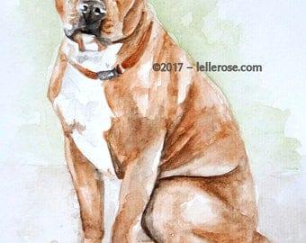 Watercolour Print - Boxer