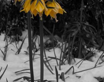Flower Umbrella under Snow