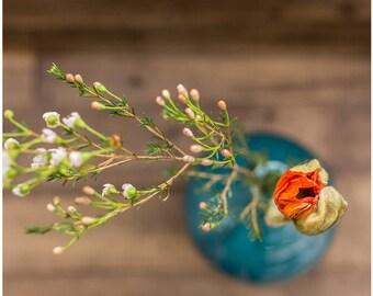 Plant Life #6 | Framed