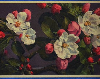 Apple Tree Blossoms Art Printed in Switzerland Antique Early 1900s Postcard