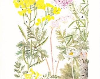 1930s Flower Print - Wallflower - Vintage Home Decor Botany Art Illustration for Nature Science Woman Great for Framing
