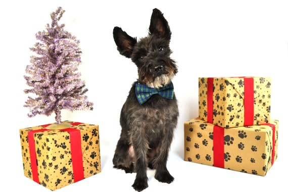 Blue Green and Gold Plaid Holiday Christmas Bow Tie and Collar