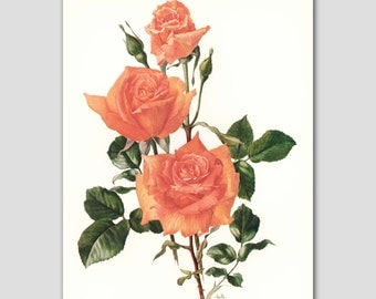 "Rose Art, Cottage Chic Wall Decor, 1960s Orange Flower Print, Vintage Room Illustration --- ""Bettina"" No. 28"