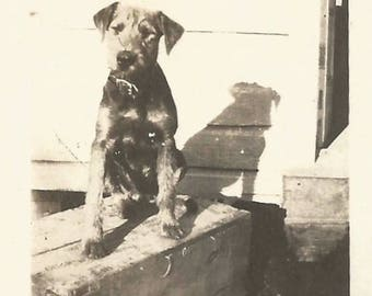 "Vintage Snapshot ""Buster"" Mixed-Breed Rescue Dog Terrier Small Found Vernacular Photo"