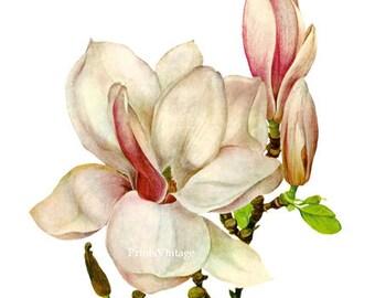 Magnolia Clipart, Magnolia Print, Vintage Art, Printable Image, Instant Download