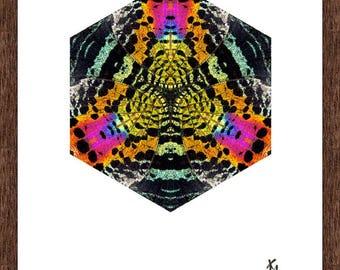 Madagascan Sunset Moth (Chrysiridia rhipheus) upperwing