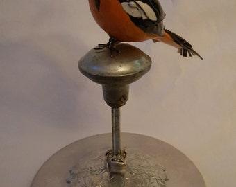 Oriole bird art