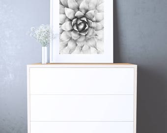 SUCCULENT POSTER - Printable Instant Download - Succulenti Wall Art - black and white Photography - scandinavian poster - Wall Decor Poster
