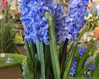 Hyacinths in Rustic Flower Box