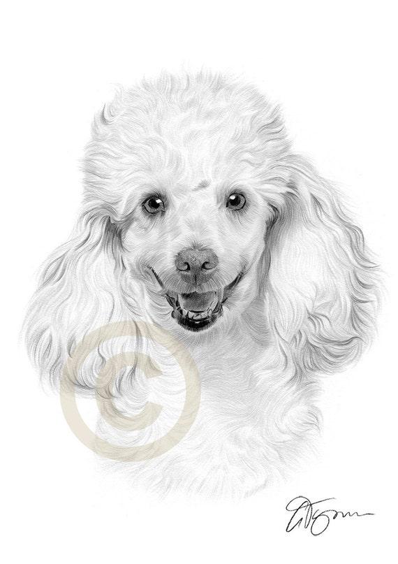 Art culos similares a l piz de caniche perro dibujo impresi n arte tama o a4 firmado por el - Dessin caniche ...
