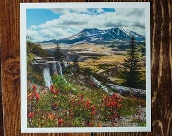 "Mount Saint Helens Washington Wildflowers 5""x5"" Mini Photograph Art Print   Flowers Volcano Nature Hiking Outdoors Earth Photography Art"