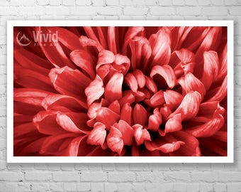 Red wall art, abstract art framed, chrysanthemum flower, macro photo, framed floral art, living room floral theme, pictures of flowers