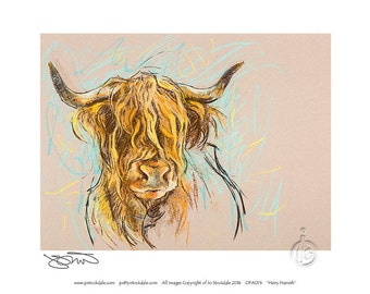 how to draw a highland cow