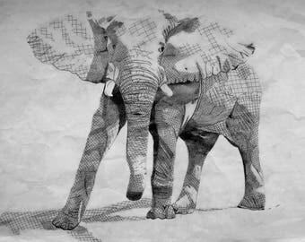 Elephant Posing