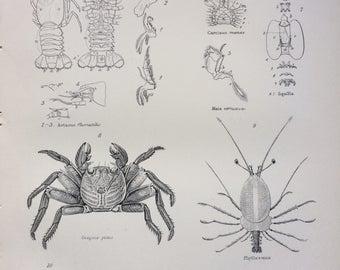 1891 CRUSTACEA Original Antique Steel Engraving Encyclopaedia Illustration - Marine wall decor - home decor - Crab - Lobster - Shrimp