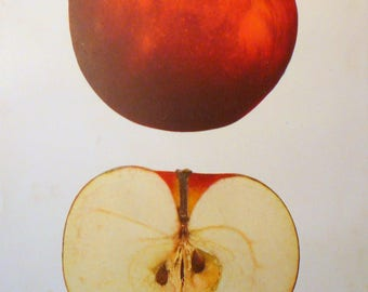 Fresh Apple print - 1930s science manual - Beautiful gift for artists florists fruit lovers botanical